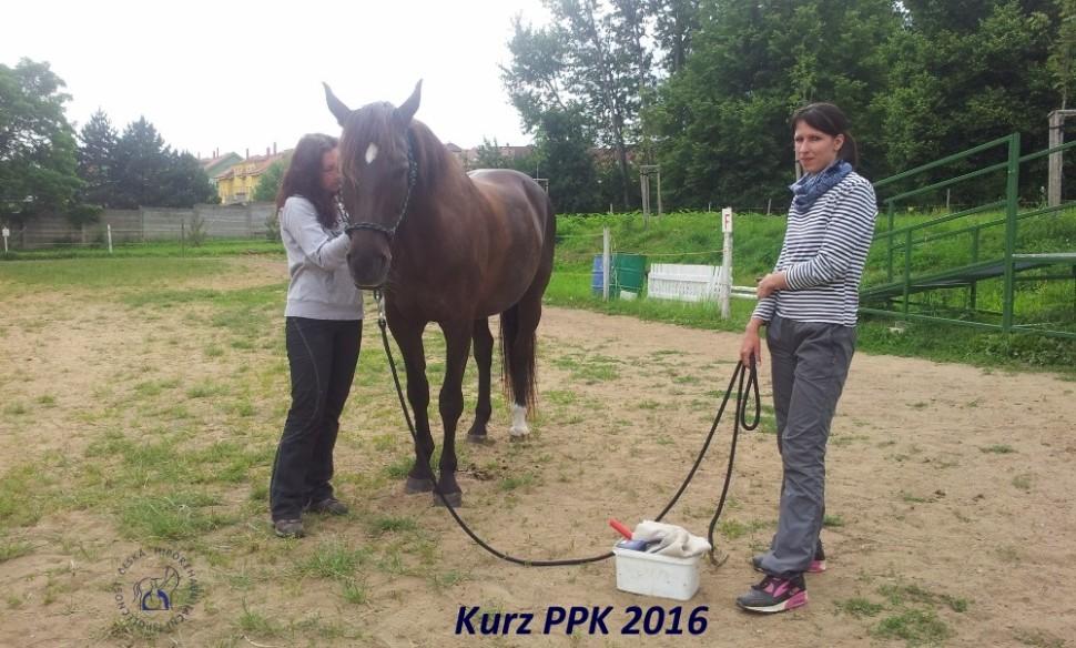 kurz-ppk_cerven_2016-11