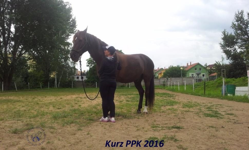 kurz-ppk_cerven_2016-17