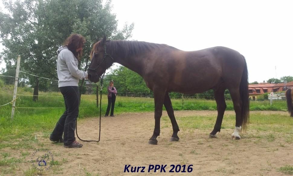 kurz-ppk_cerven_2016-20