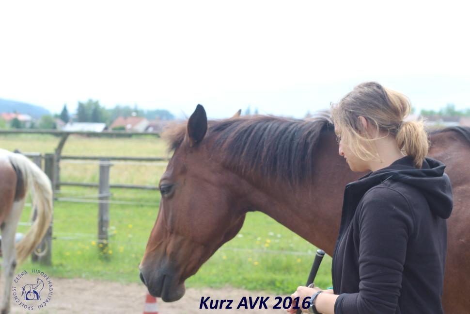 kurz_avk_2016-28
