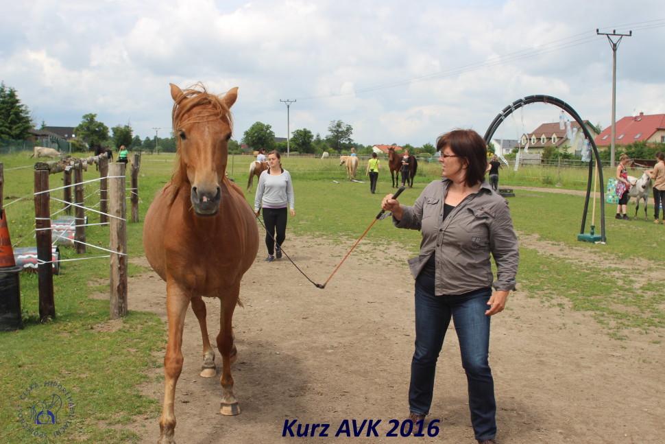 kurz_avk_2016-38