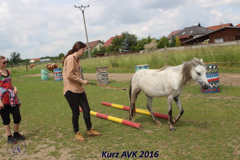 kurz_avk_2016-41