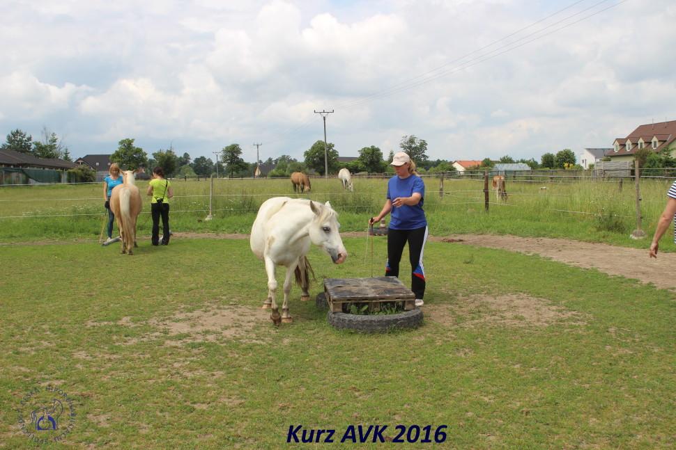 kurz_avk_2016-43