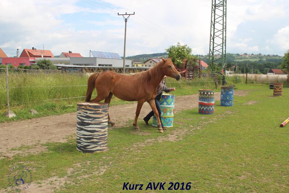 kurz_avk_2016-44