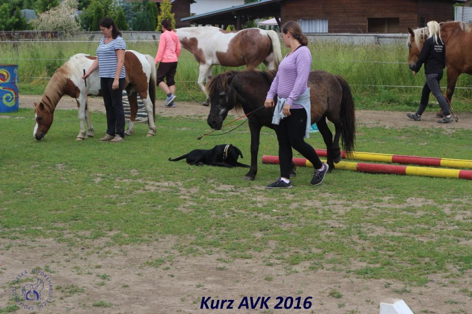 kurz_avk_2016-48