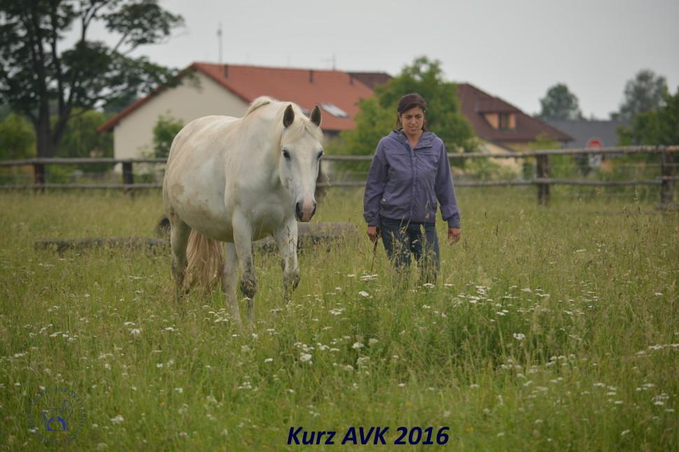 kurz_avk_2016-5